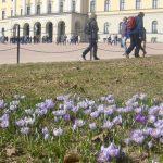 'Worst ever' pollen season predicted