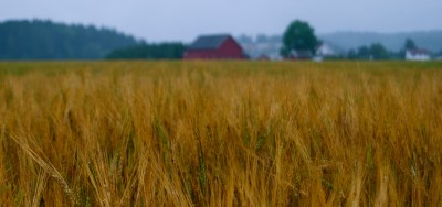 """Norwegian farms not only provide local food but also enhance the so-called """"cultural landscape,"""" but they're expensive to maintain. Norwegians pay the price at the grocery store and through their taxes. PHOTO: Views and News"""