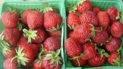 The price for a basket of Norwegian strawberries is expected to remain high this summer, after growers lost nearly half their crop in a fungus attack. PHOTO: newsinenglish.no