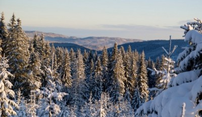 The hills of Nordmarka are easily accessible both in winter and summer. PHOTO: newsinenglish.no
