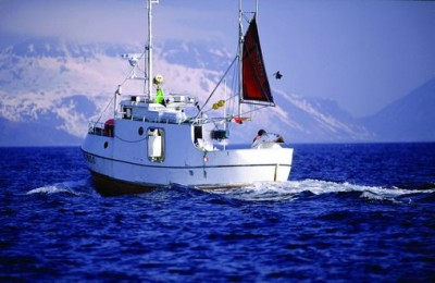 Norwegian fishing boats are catching lots of cod this winter, and now need more customers for it all. PHOTO: Norwegian Seafood Council