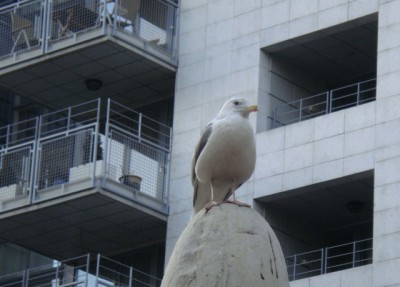 A seagull at the Aker Brygge commercial and residential complex on Oslo's waterfront waited for its next victim. PHOTO: newsinenglish.no