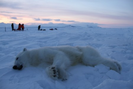 Two skiers claim they felt forced to shoot this polar bear Thursday evening as it ran towards them and appeared to be on the attack. PHOTO: Sysselmannen på Svalbard/Arild Lyssand, Police Chief Inspector