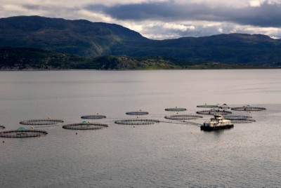 Fish farms dot the Norwegian coast and are often found in scenic locations, but they're just as often criticized for spreading salmon lice and producing fish that are full of chemical substances. PHOTO: newsinenglish.no