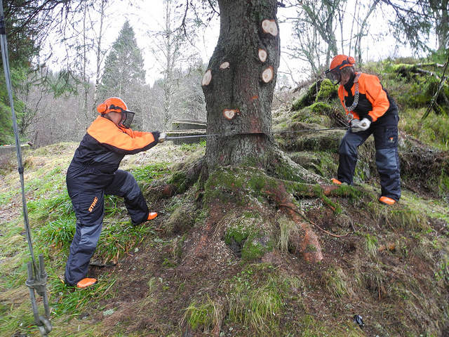 Cutting down a Christmas tree from Bergen to Newscastle