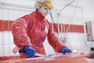A worker at SalMar, one of the world's largest farmed salmon producers. PHOTO: SalMar