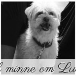 Moss locals organised a memorial service for Lucas the dog, to be held on Wednesday evening. A man confessed to killing the dog after a social media witch hunt. Animal welfare group NOAH said there had been an alarming increase in the number of animal cruelty cases reported so far this year. PHOTO: Facebook.com/Minnemarkering for hunden Lucas