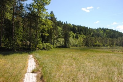 The forests, like this one in Østmarka, are so dry around the Oslo area after weeks of hot weather that authorities have banned all campfires and warned people not to smoke anywhere near trees or dry grass. Rain was predicted, and welcome. PHOTO: newsinenglish.no