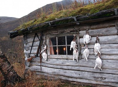 Grouse hang from the wall of a traditional cabin in the mountains of Norway. This year's hunt gets underway on September 10. PHOTO: Statskog