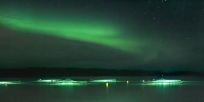 Cermaq salmon farming under the Northern Lights. PHOTO: Cermaq