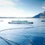 Salmon survives trade sanctions