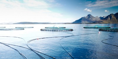 Norwegian salmon raised in farms like this Cermaq facility is selling briskly, despite Russian sanctions and blocked markets in China. PHOTO: Cermaq