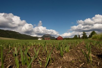 Some farms in Norway are also starting to open their doors to refugees. PHOTO: Landbruks- og mat departementet