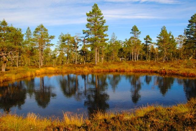 Autumn, marka,