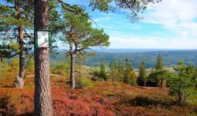 Autumn colors, marka, scenery,