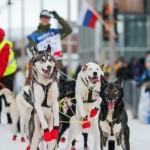 Major dogsled race starts in Finnmark