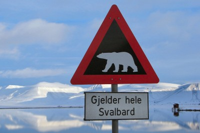 Polar bear warnings are always up with good reason on Svalbard, especially now. PHOTO: Wikipedia Commons