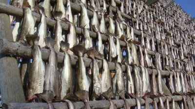 Demand for Norwegian cod, both fresh and preserved, is higher than ever and prices are too. Here are racks of cod drying in Lofoten, mostly for export to countries fond of bacalao. PHOTO: newsinenglish.no