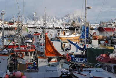 The harbour here at Svolvær in Lofoten is a busy place, for both commercial and tourism-related fishing. PHOTO: newsinenglish.no