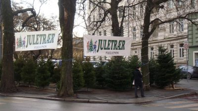 Many of the Christmas trees sold on lots set up in places like Oslo's Skillebekk district are imported. PHOTO: newsinenglish.no