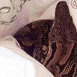 Seized snake stolen