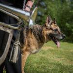 Dog-training preps minister for NATO